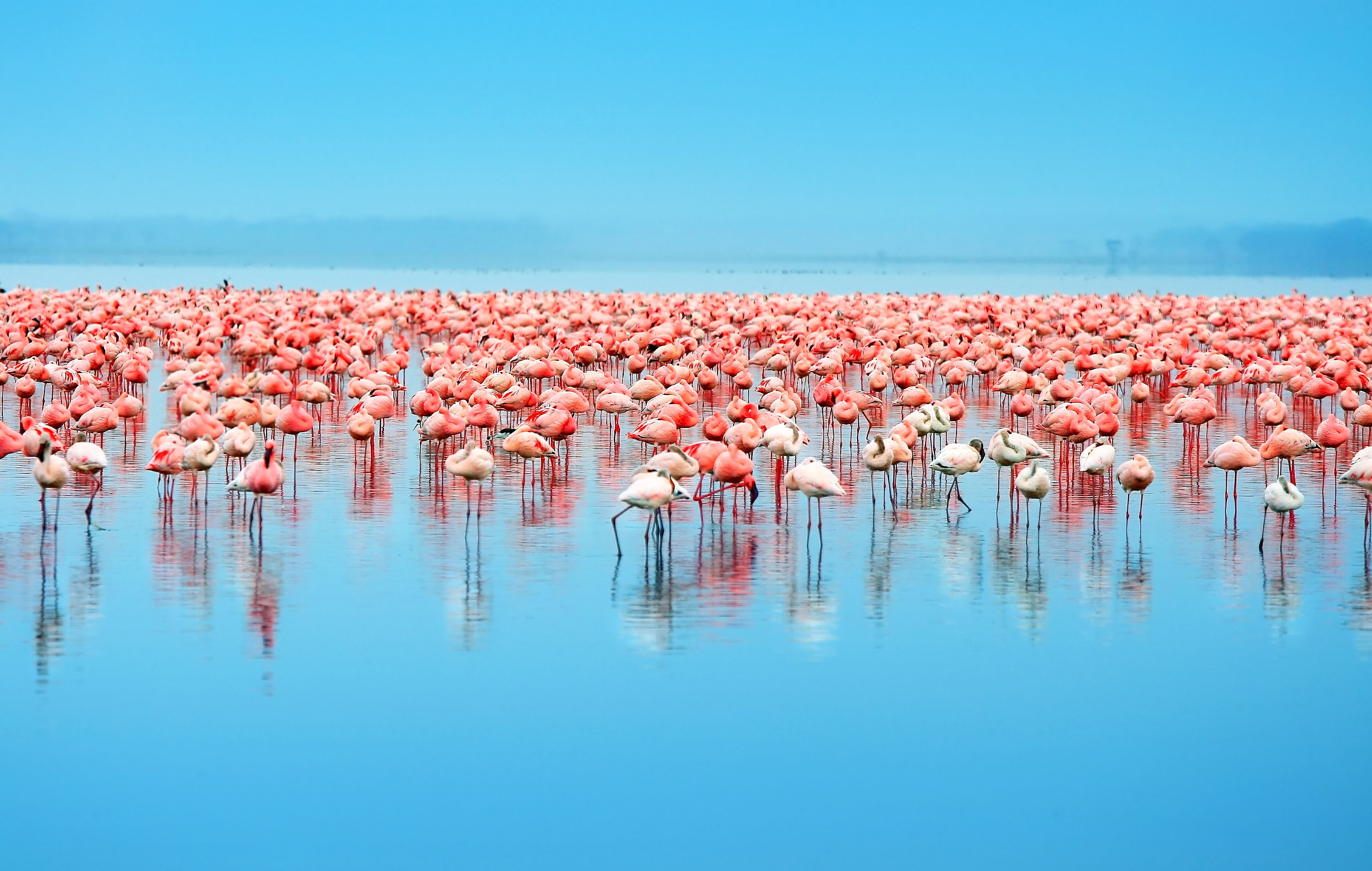 http://obatala.co.uk/wp-content/uploads/2015/09/Flamingos.jpg